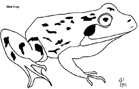 leopard frog coloring page frogs for kids minnesota pollution control agency