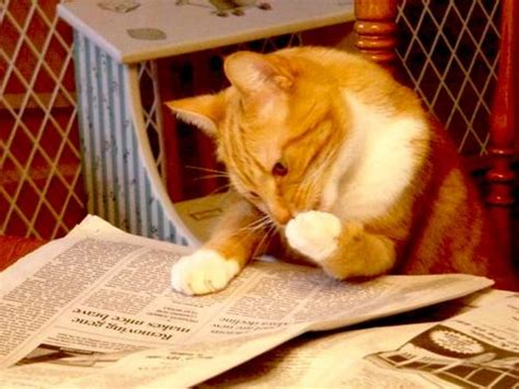 how to live like your cat books rise of the planet of the cats