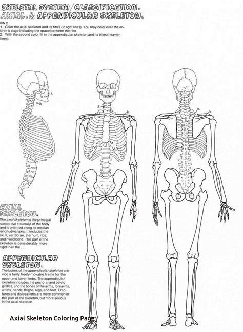 28 Axial Skeleton 80 Bones Seer