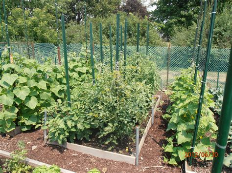 The Summer Garden 2012 Glenns Garden Gardening Blog Summer Garden Vegetables