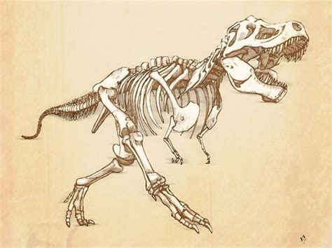 Drawing T Rex Dinosaur by T Rex Drawing Skeleton Archetype Drawings