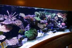beautiful marine aquariums on pinterest reef aquarium