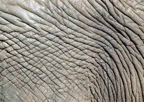 pin texture skins backgrounds on elephant skin background animal skin backgrounds with different camouflage textures and