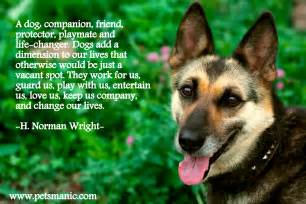 dogs as pets quotes pets manic