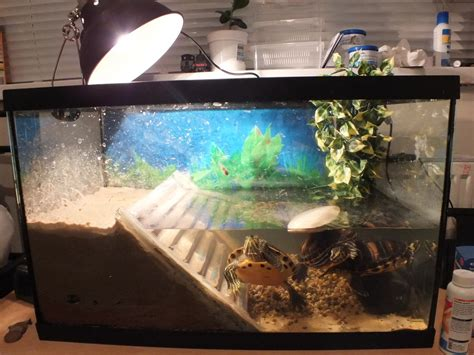aquarium design for turtles turtle tank video turtle tank for the well being of your