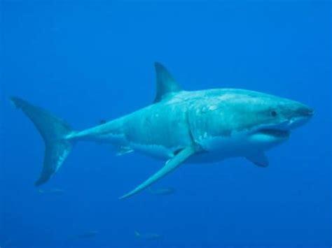 schlafen haie warum sind haie immer in bewegung