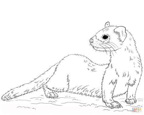 ferret coloring pages az coloring pages