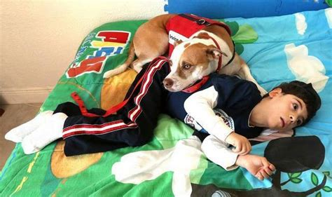the dog house miami in fight over boy s service dog broward school board is brought to heel miami