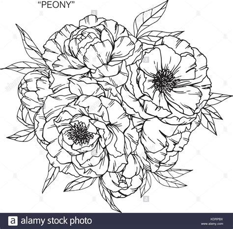 fiore di peonia bouquet di fiori di peonia disegno illustrazione