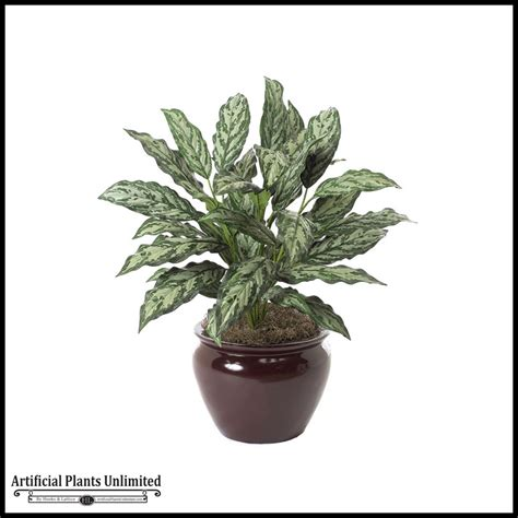 30in aglaonema plant two tone green indoor