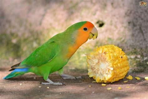 top 9 best pet birds for kids