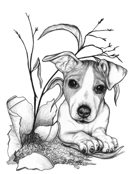rat terrier coloring page 125 best images about drawing on pinterest how to draw
