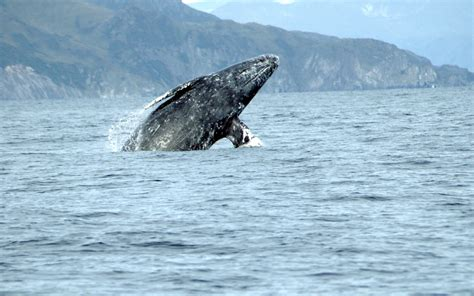 spring whale watching week in newport oregon hallmark