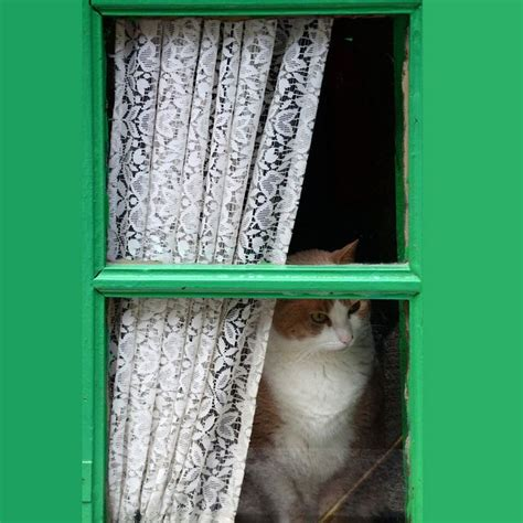 cat lace curtains 1000 images about lace curtain felinity on