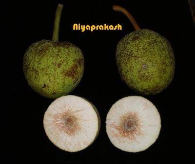 hing ka tree niya s world breadfruit bajji kadachakka bajji