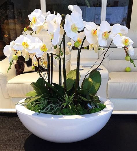 Orchid Planter Ideas by 25 Best Ideas About Orchid Pot On Orchids
