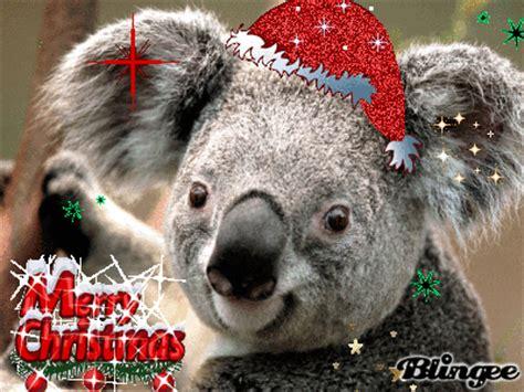 koala christmas picture  blingeecom