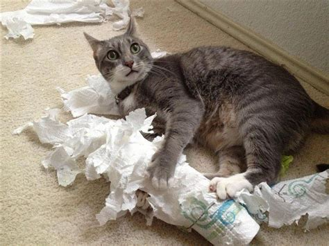 cat wallpaper rolls 15 hilariously guilty pets caught in the act