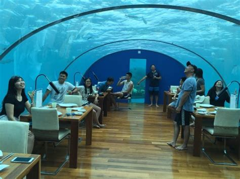 ithaa undersea restaurant prices ithaa undersea restaurant at conrad maldives rangali island picture of ithaa undersea