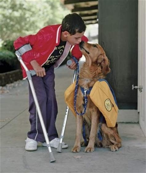 how do they service dogs 10 top rescue dogs be prepared to be touched pets fans