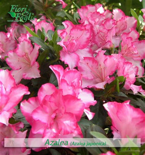 nomi di piante e fiori come si chiama diamo un nome a fiori e piante fiori e