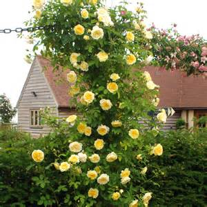 Best Climbing Plants For Shade - the pilgrim highly recommended popular searches