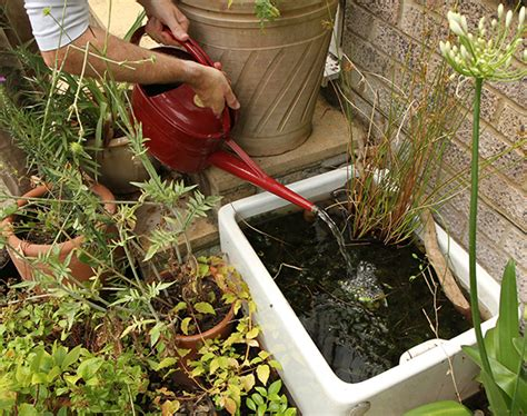 how to make a frog pond in your backyard create a mini pond
