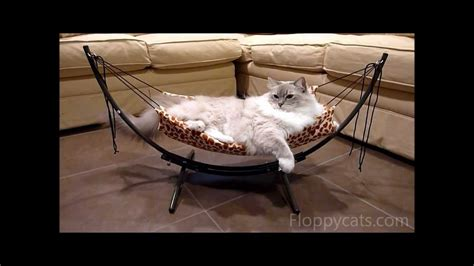 how to put together the trixie cat bed hammock ねこ ラ