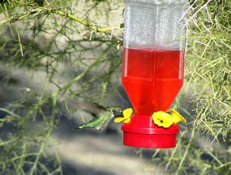 hummer feeders 28 images ruby throated hummingbirds on