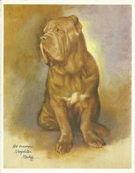 mastiff colors neapolitan mastiff by rien poortvliet 1983 colour