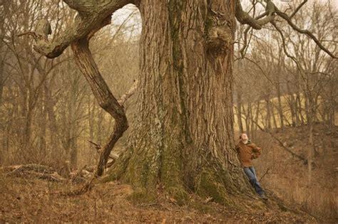 remarkable trees  virginia blueridgecountrycom