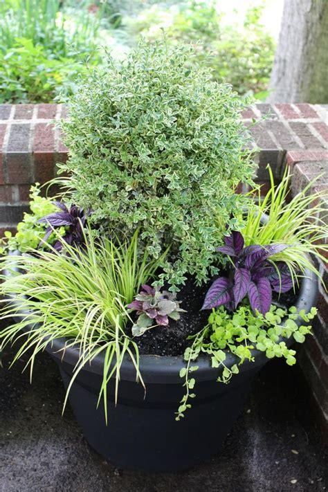 Large Garden Plant Pots Best 25 Large Garden Pots Ideas On Large