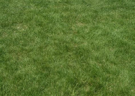 grass pattern for photoshop 60 best photoshop grass textures free psd download free