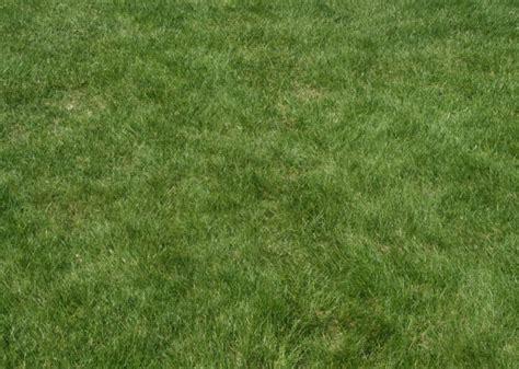 pattern photoshop grass 60 best photoshop grass textures free psd download free