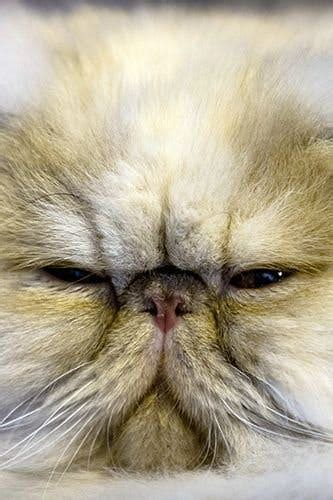 biography meaning in persian the best grumpy cats stylist