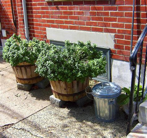 sidewalk barrel planters love s photo album