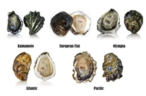 from reefs to rivers florida s fisheries science blog awe schucks an oyster tasting guide