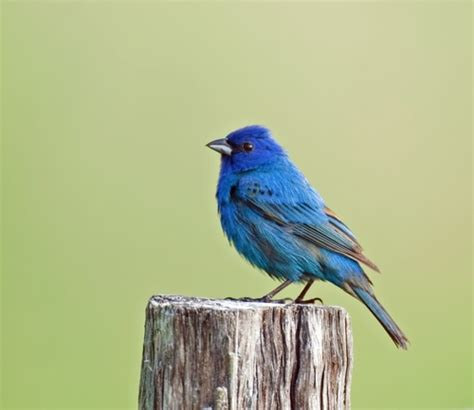 cornell launches archive of 150 000 bird calls and animal