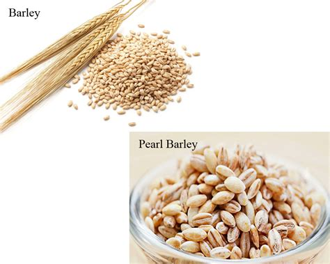 Pearl Barley 250 Gr barley vs pearl barley thosefoods