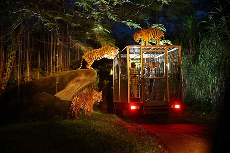 A Marvelous Take On The Safari Look With Out Of Africa by Singapore Safari Tips How To A Wonderful Trip