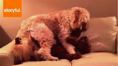 puppy nightmares dogs comforting another after a nightmare