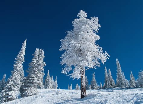 Cold Winter Essay by Essay On A Cold Winter Day