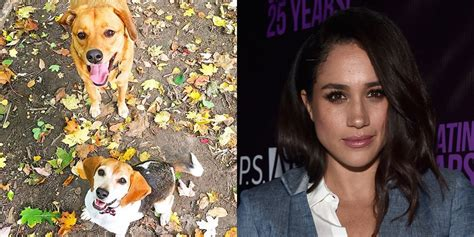 meghan markle dogs meghan markle forced to leave one of dogs in america pets
