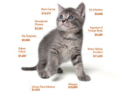 how to do a cat cat insurance trusted coverage for 40 years petplan