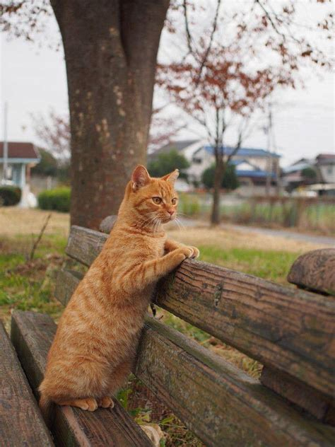 how to stop cats jumping on benches cute ginger cat on park bench luvbat