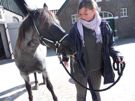 pferd liegen beibringen pferdeerziehung pferdeschule weser ems