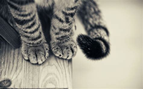 Wallpaper Cat Paw | cat s paws and tail wallpaper 17078