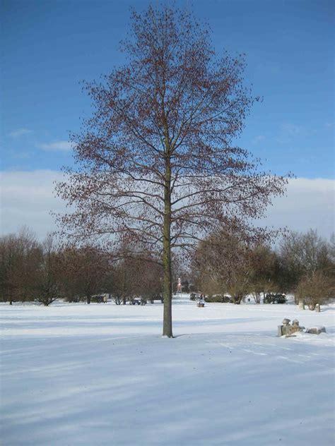 Britzer Garten Im Winter by Quot Nachbarn News Quot Lichtenrade Und Seine Nachbarn Januar 2010