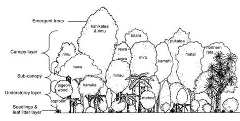 rainforest canopy coloring page bush layers understanding the bush