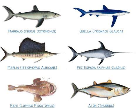 los peces de la peces mi sitio
